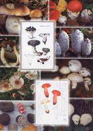 Foto e tavole scientifiche dei funghi